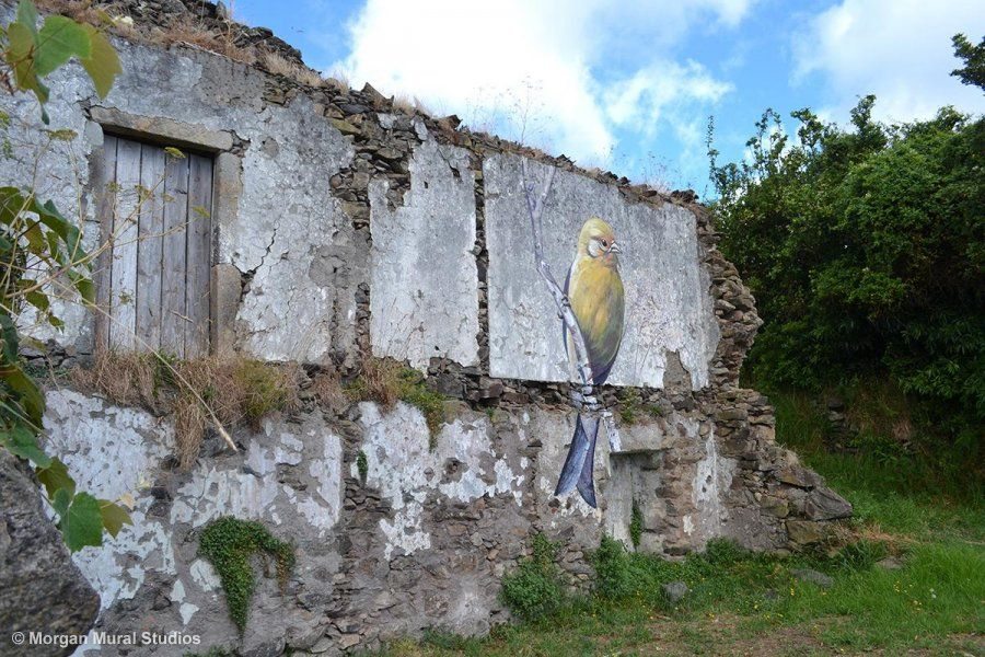 Canary mural on a ruin wall, Ilha das Flores, Azores, Portugal