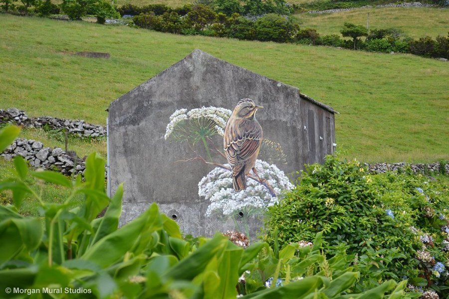 Lincoln Sparrow and Yarrow mural on a ruin wall, Ilha das Flores, Azores, Portugal